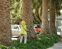 Urban Forestry Employee Taking Tree Inventory